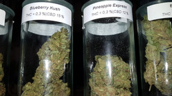 Blueberry Kush u. Pineapple Express