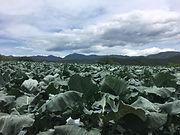 farm_scenery