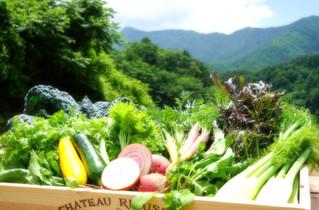 標高1,000mの野菜セット Web Store 取り扱い開始のご案内