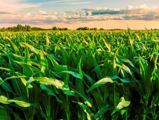 Seguro rural: Agricultura libera mais R$ 73 milhões em programa de subvenção
