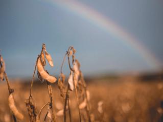 Fazenda de soja investe em tratamento e biodiversidade de solo