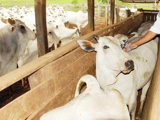 Brasil e Paraguai firmam acordo para proteger criação de gado na fronteira