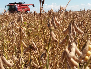Mais da metade da soja no Brasil já foi colhida, apesar da chuva, diz AgRural