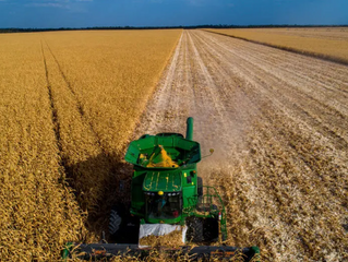 IBGE aumenta projeção da safra agrícola, com colheita maior de milho, algodão e feijão