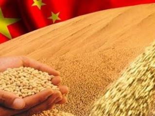 China planeja ampliar quantia de terra para plantio de soja e outras oleaginosas
