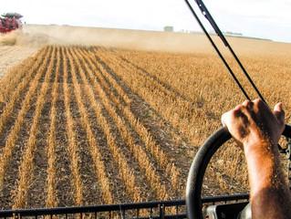 Agricultura: exportação de grãos deve crescer 40% até 2028/29, prevê estudo