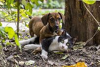 chien et chat drole
