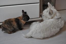 chien et lapin amoureux