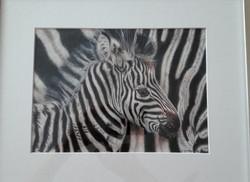 Zebra_edited