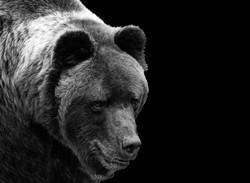 DO_ black forest bear_LyndaMcLeish