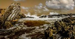 King-of-the-Rocks_DA_Mieke-Wood