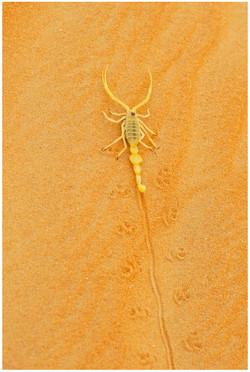 DS_Scorpion on Dune_David Steele