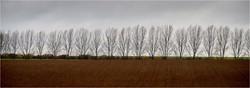 Autumn Landscape_Rhond McInnes