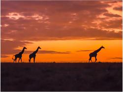 DO_African Sunrise_Gillian Robertson