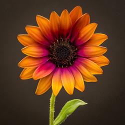 Mieke-Flower