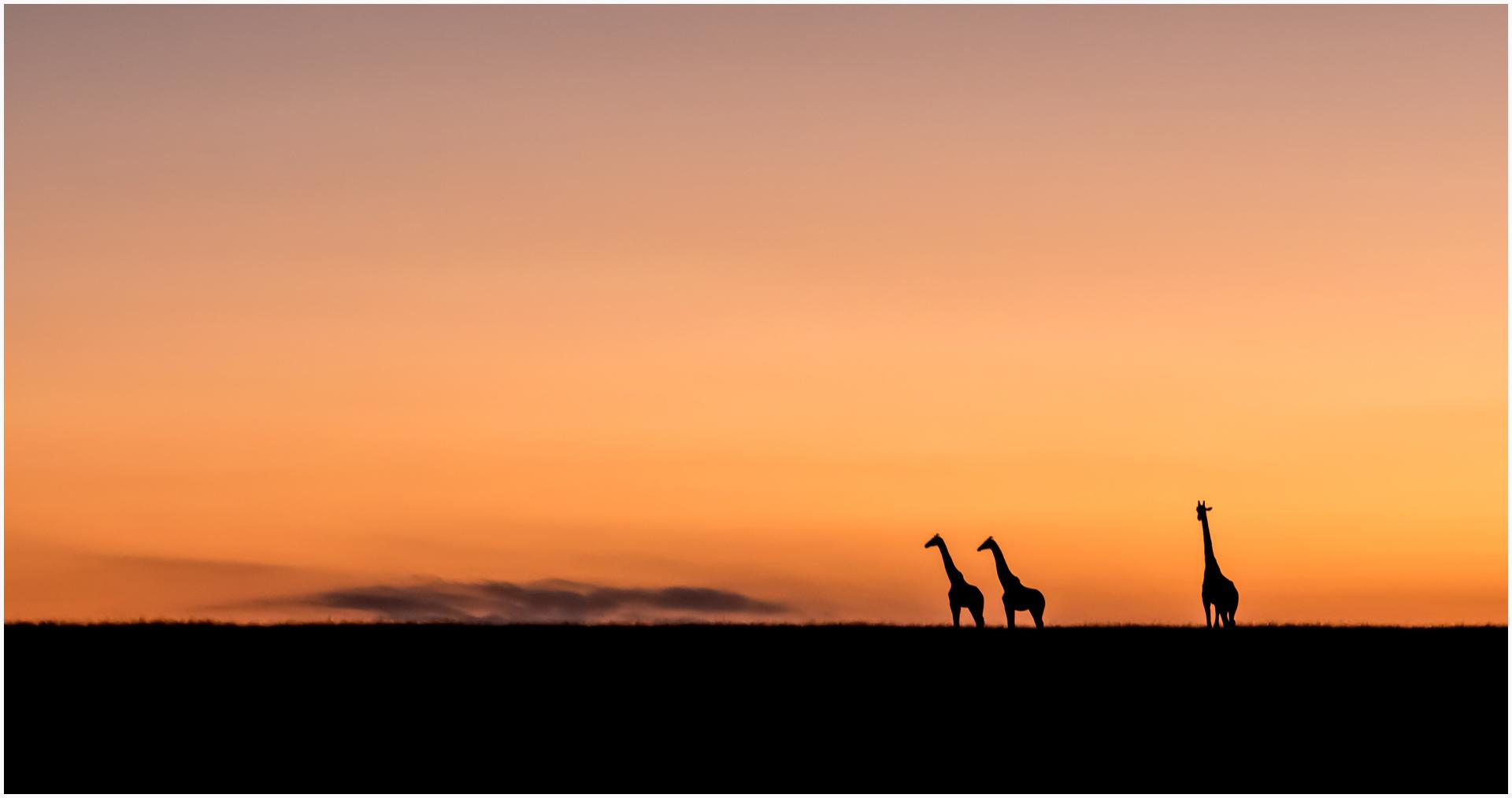 DO_Dawn on the Mara_Ian Robertson