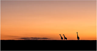 DO_Dawn on the Mara_Ian Robertson.jpg