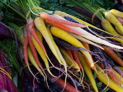 MC_Colourful Carrots_Val_Marsden