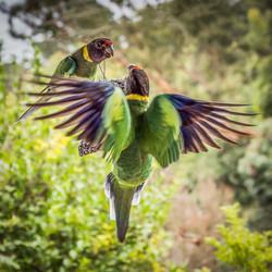 Bird Disagreement_Gillian Robertson