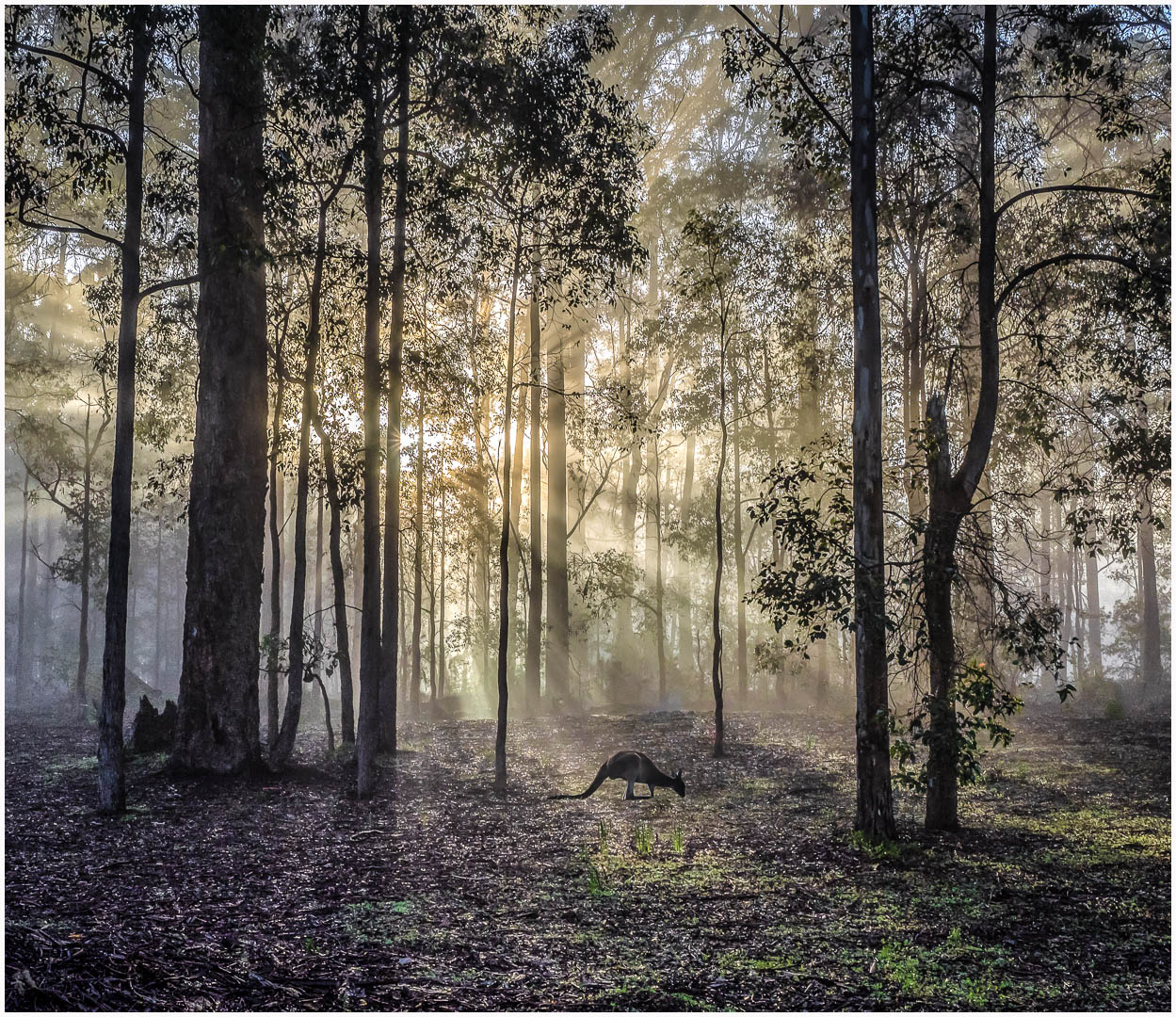DO_Misty Morning_Ian Robertson