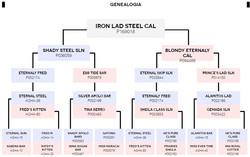 Iron Lad Steel CAL - P169018