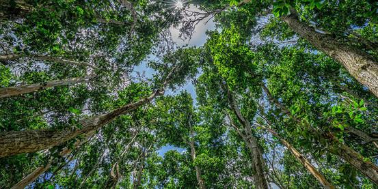 jozani-forest-trees.jpg