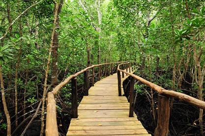 jozani-forest-tour-zanzibar-mangrove-boa