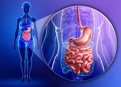 Ah, le ventre! Partie 1 : microbiote et système immunitaire