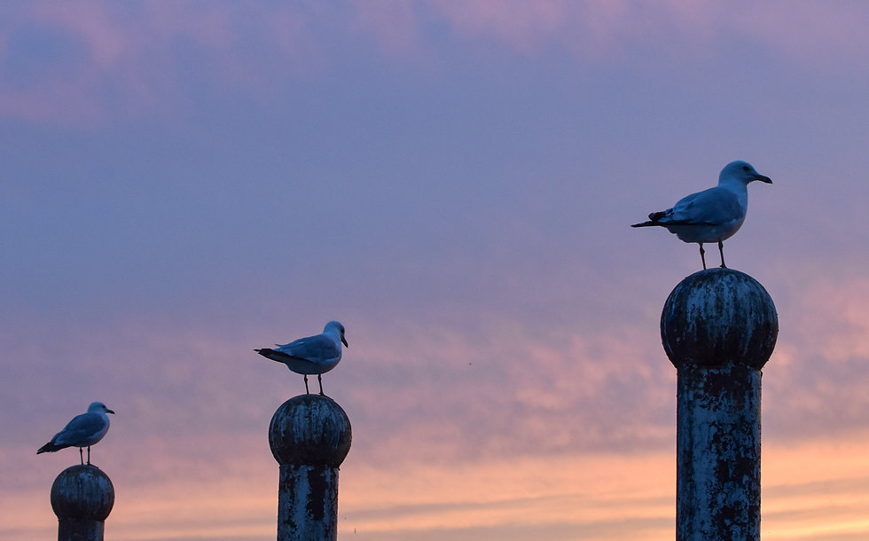 Three seagulls perched on three poles wi