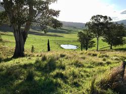 Yarragee landscape