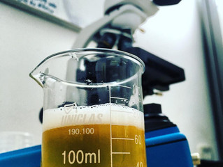 Cerveja é tudo igual?