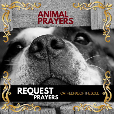 Prayer Requests for All Non-Human persons
