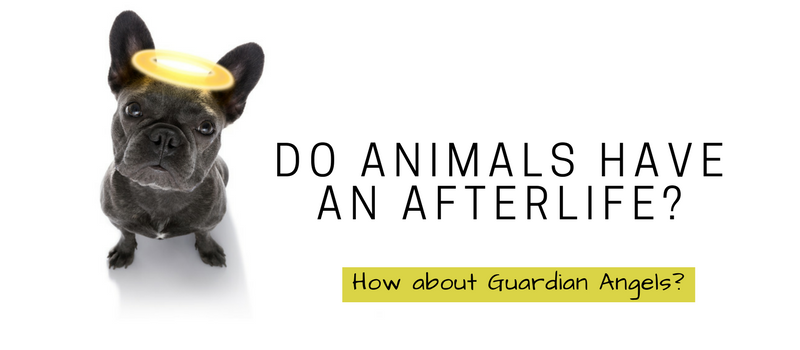 Do animals have an afterlife?