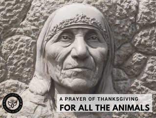 A PRAYER OF THANKSGIVING FOR ALL THE ANIMALS