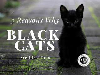 5 Reasons Why Black Cats Are Ideal Pets