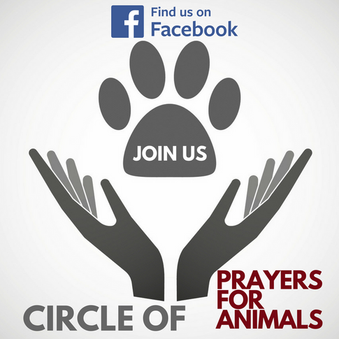 Join our Group of Animal Lovers