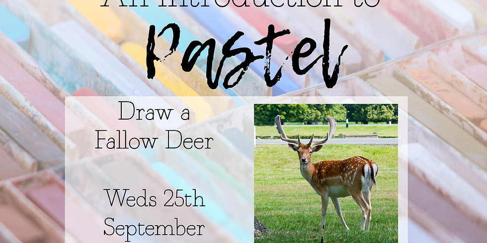 An intro to Pastel, Fallow Deer Weds 25th September