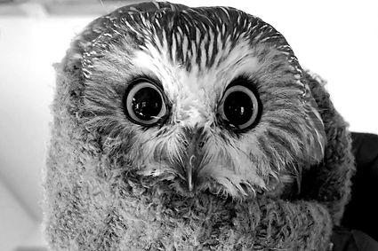 9ab57025-ce45-4d58-b4d5-1650f9a238a4-owl