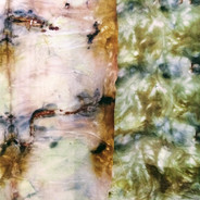 onion, rust, echinacia.jpg