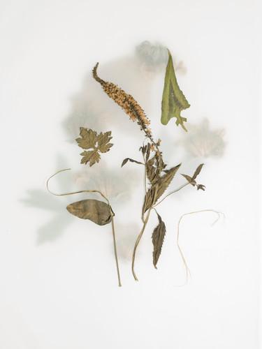 Summer Prairie Leaves 6