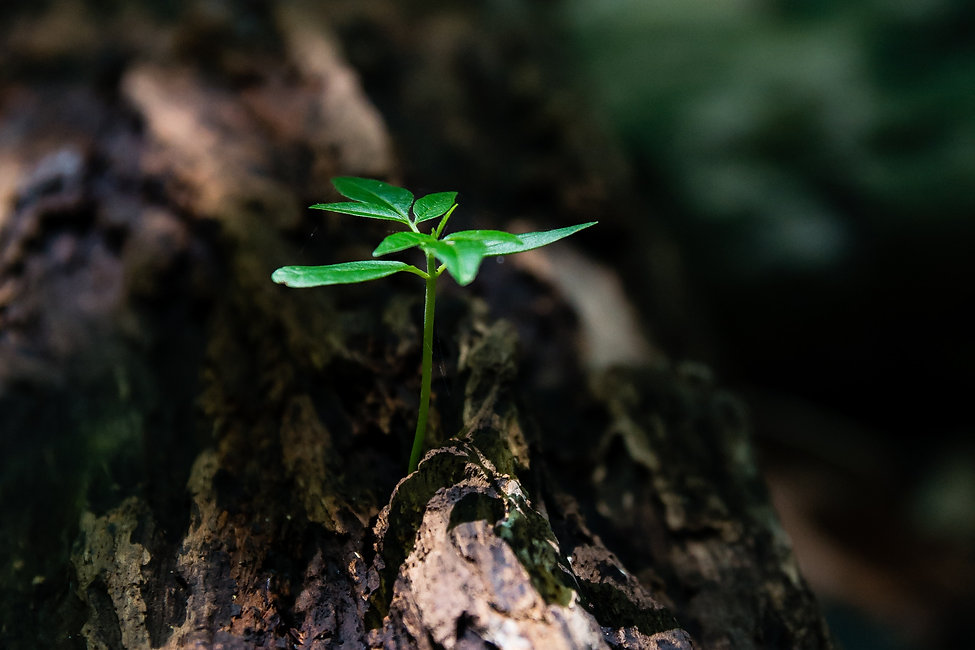 Earth Restore Initiative.jpg