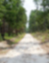 promised land photo.jpg