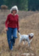 English Setter, dog training