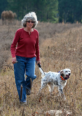 English Setter, dog training