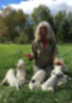 Jennifer Higgins, English Setter