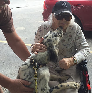 English Setter, pet therapy, therapy dog