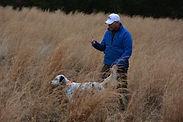 English Setter, birddog training