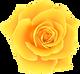 Yellow_Rose_PNG_Clip_Art_Image (1).png