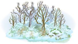 Deciduous forest winter