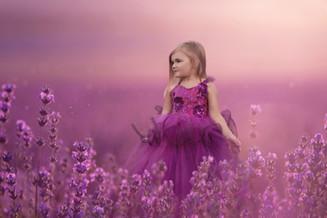 Dreaming in Lavender.jpg
